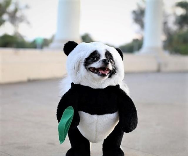 puppy costume 2