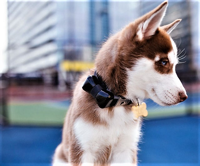 WonderWoof BowTie Dog Activity Tracker